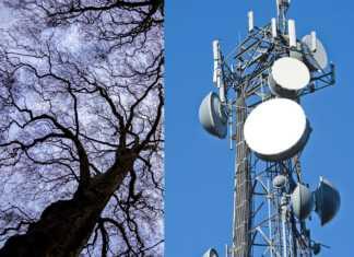 uszkodzenia-drzew.jpg