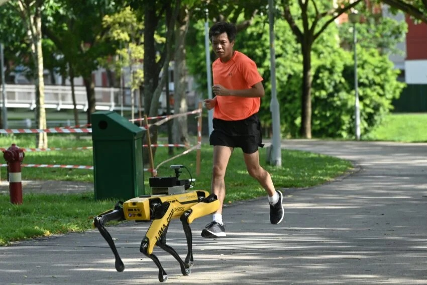 robot-pies-dystans.jpg