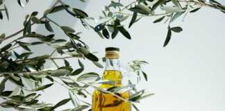liście-oliwne.jpg