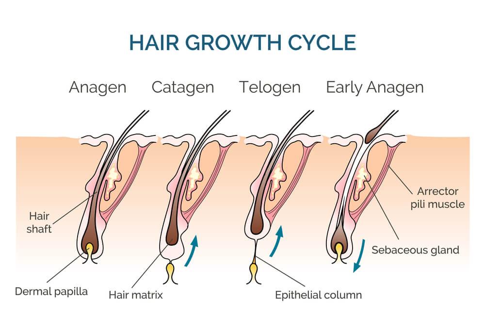 wzrost-włosów.jpg