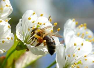 ogród-i-balkon-dla-pszczół.jpg