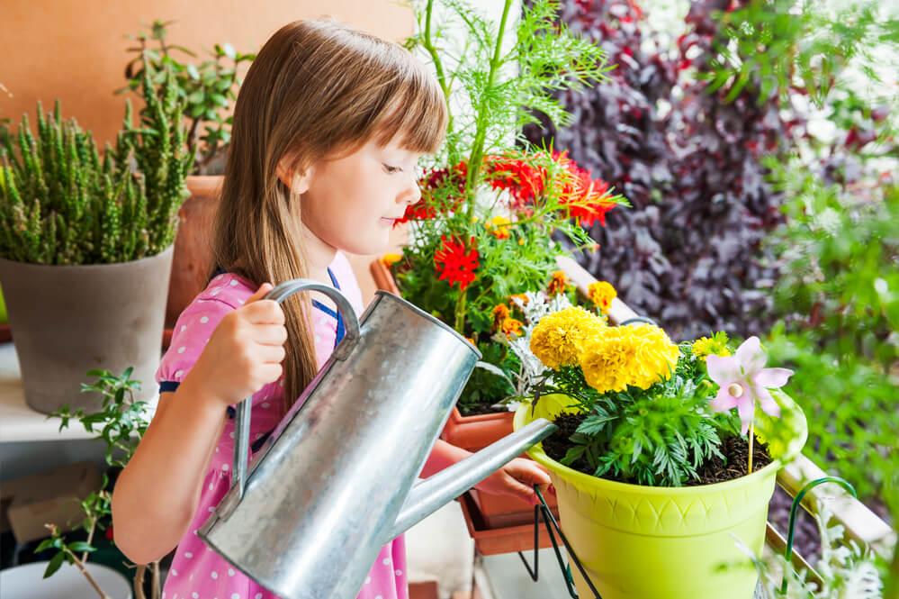 rośliny-miododajne.jpg